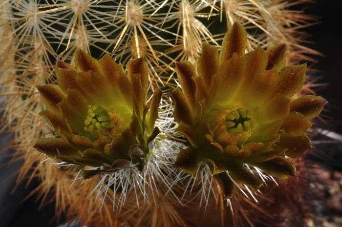 Bijzondere bloemkleur - Bijzonder tuinfoto ...
